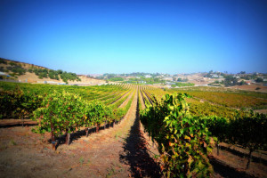 Temecula-Wine-Country-California
